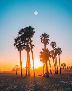 Santa Monica, California by michaelste California Palm Trees, Santa Monica California, California Dreamin', Venice Beach, Places To Travel, Places To Visit, San Diego, Sunset Wallpaper, Iphone Wallpaper