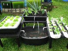 98 Best Water Gardening Images Aquaponics Hydroponics 640 x 480