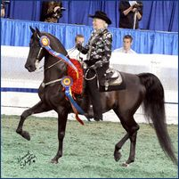 Western Tack, Western Pleasure, Westerns, Horses, Animals, Animales, Animaux, Animal, Animais