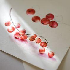 Red Currants #watercolor #redcurrants #illustration #watercolour #art