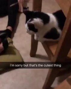 Funny Animal Jokes, Funny Animal Videos, Cute Funny Animals, Funny Animal Pictures, Funny Cute, Animal Memes, Funny Videos, Cute Kittens, Cute Stories