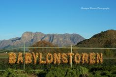Darling Day Out: Babylonstoren on www.ohdarlingdays.co.za Photography by Monique Warner Atlantis, Wayfinding Signage, Romantic Getaways, Days Out, Tour Guide, Vineyard, Tours, Photography, Fotografie