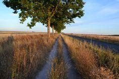 CAMINO DE SANTIAGO FRANCÉS. Una mañana de septiembre de 2013, el sol a mis espaldas, el premio al final del Camino...Cuantos pasos...