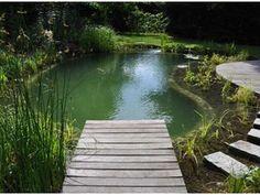 Hét ecologisch zwembadalternatief? De zwemvijver! - Vijver - Livios Ponds Backyard, Garden Pool, Water Garden, Natural Swimming Ponds, Natural Pond, Pond Waterfall, Water Features In The Garden, Pool Water, Pool Houses