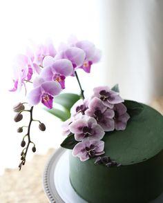 #orchid cake  . Buttercream flowercake  _  #플라워케이크  #플라워케익 #대구플라워케이크  #버터크림플라워케이크  #꽃 #꽃케이크 #꽃스타그램  #케이크  #메종올리비아  #베이킹 #베이킹그램  #flowercake  #flower  #buttercreamdecorating  #buttercreamflowercake #buttercream  #buttercreamcake #koreaflower #koreanflowercake #koreabuttercreamflower #koreabuttercreamcake #koreaflowercake  #bakingram #cake #orchidcake #maisonolivia