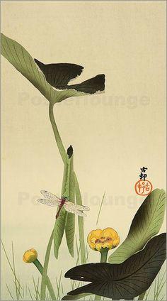 Poster Libelle an einer Teichrose