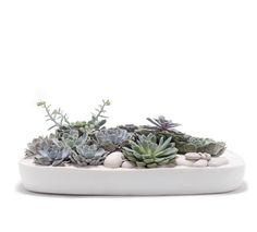 Succulents Garden - table Top www.PlantTheFuture.com By Paloma Teppa