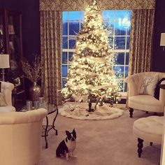 For me it doesn't get much better than an evening relaxing in front of the tree! #bunnythebostonterrier #bostonterrier #cutedog #christmas #christmastree #pier1 #bostonterriergram #bostonterrierlove #bostonterriersofinstagram #btcult #mansbestfriend #squishyfacecrew #dog #dogsofig #dogsofinstagram #dogstagram #dogs_of_instagram #pet #paws #petstagram #petsdaily #ilovemydog #instadog #instapet #loveit #lovedogs