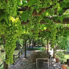 Grapes. My inner landscape - blulilly:   (via CASA TRÈS CHIC)