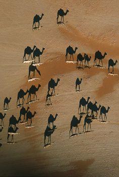 shadows #camels #sand #desert