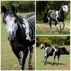 Animal costumes! I hope the horse skeleton glows in the dark!!  lol