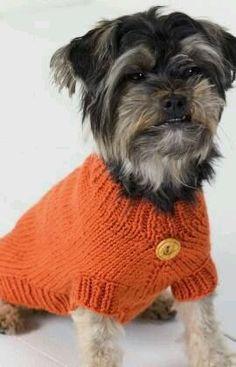 Life is Ruff Knit Dog Sweater pattern Knitted Dog Sweater Pattern, Knit Dog Sweater, Dog Pattern, Sweater Patterns, Free Pattern, Clothes Patterns, Simple Pattern, Coat Patterns, Pattern Books