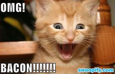 OMG! It Is Bacon #humor #lol #funny