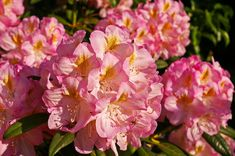 Perennials, those plants that return each year, provide a low-maintenance way to have a beautiful, colorful garden.