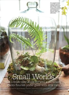 I received one of these amazing terrarium containers for Christmas from Brad and Deanna. I can't wait to put an amazing orchid in it. I love this!!