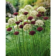 Flower Gardening My Favorite Plant Combinations 69 - Gardening with Containers is a whole lot more fun. It functions as far more than only a garden, however. You've started to plan your next garden regarding needs and desires, your finances, an… Easy To Grow Bulbs, Bulb Flowers, Plants, Beautiful Gardens, Plant Combinations, Planting Flowers, Garden Pictures, Flower Garden, Garden Design