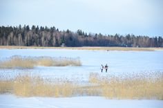 Now, you can have a walk on the sea. Finland, Places To Visit, Frozen, Sea, Mountains, Canning, Nature, Travel, Outdoor
