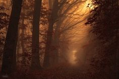 Silence in the wind of the trees Phtotgraph by Janek Sedlar.  I want to walk into this forest and hear the trees sigh. How about you? (scheduled via http://www.tailwindapp.com?utm_source=pinterest&utm_medium=twpin&utm_content=post606065&utm_campaign=scheduler_attribution)