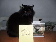 cat-shaming-43__605.jpg (800×600)