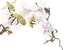A Bug's Life - Shelley Davies
