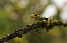 Focus Stacked Macro Photos of Bugs by Photographer Nicolas Reusens macrobugs10