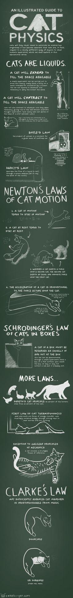 Características físicas de los gatos