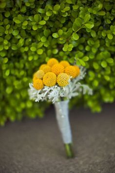 Simple bridesmaid bouquet of all billy balls and grey dusty miller greenery.