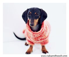 These photos remind me of a 90s GAP ad. Continuing with our fall theme, we're celebrating chunky sweater weather.  http://wp.me/p27Fw1-wB #dachshund #doxies #chunkysweaters