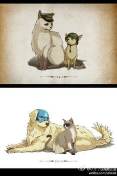 Steve & Bucky (I love how Bucky becomes grumpy cat. And the worship that the Steve chihuahua has for the Bucky cat)