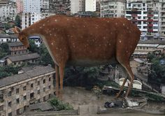 Di Liu. Огромные животные » Outshoot