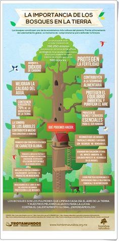 """Día Internacional de los Bosques, 21 de marzo: """"La importancia de los bosques en la Tierra"""" (Infografía de hombrenaturaleza.org.mx)"""