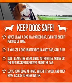 Dogs Die In Cars! #NoHotPets - Infographic - Cute Gif and a Video. Please share this info Thank You! Click and see all the info!