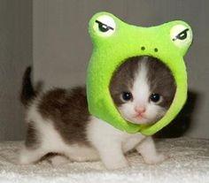 Cutest frog I've ever seen!