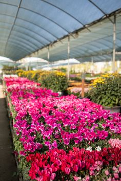 Extension Office, Fall Planting, Citrus Heights, Shade Plants, Early Spring, Perennials, Bloom, Nursery, Seasons