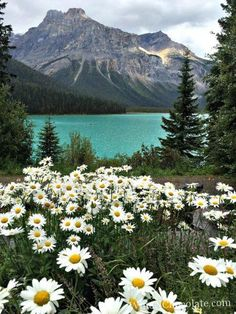 Emerald Lake Yoho National Park Canada