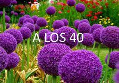 A los 40