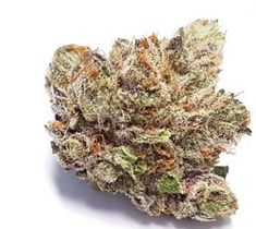 Medical marijuana Archives - Page 3 of 4 - Global Weed Shop Indica Strains, Weed Strains, Buy Edibles Online, Buy Cannabis Online, Weed Shop, Buy Weed, Weed Buds, Farm Online, Marijuana Recipes