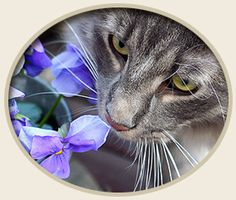 30 Essential oils that are dangerous for pets