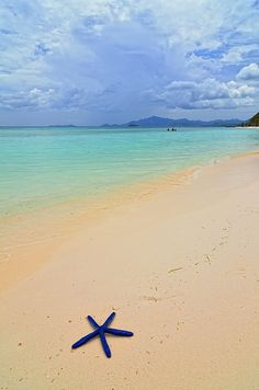 Blue Starfish on beach sand, Malcapuya Island, Palawan_ Philippines