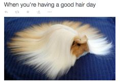 """The """"Hair On Point"""" pose."""