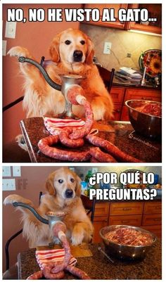 Super funny images and memes with funny phrases of monkeys, dogs and cats … - Modern Spanish Jokes, Funny Spanish Memes, Funny Jokes, Funny Images, Funny Photos, Animal Memes, Funny Animals, Memes Super Graciosos, Chesire Cat