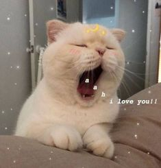 ideas for memes apaixonados gatos Cute Cat Memes, Cute Love Memes, Funny Cats, Funny Memes, Humorous Cats, Cute Kittens, Cats And Kittens, Ragdoll Cats, Cute Baby Animals