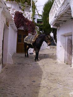 El mulo a la puerta de casa. La #Alpujarra en su esencia.  #ilovealpujarra.