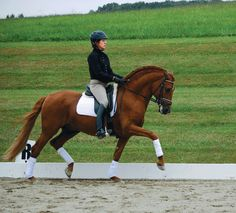 """Understand the German term """"Dehnungshaltung"""" to help make your horse more beautiful through self-carriage."""