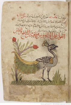 Good morning. Peacock from Kitab Na't al-hayawan wa-manafi'ihi, C13th compilation of ibn Bakhtishu. #HistSci
