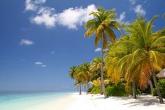 It truly is One of the Best Private Beaches! I can help you find the best, cheapest flights starting August 22 to December 19. Palm Trees, Tropical Plants, Sunshine will surround you in Paradise. Your White Sandy ...
