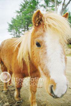 Pet Portraits - Winnie
