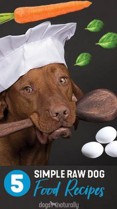 We hear people say all the time that they're afraid to make raw food for their Or that it's easier to use commercial raw (or to just keep feeding . But it's time to bust that myth - can be easy! Puppy Food, Dog Food, Dog Recipes, Raw Food Recipes, Raw Feeding For Dogs, Healthiest Dog Breeds, Dog Nutrition, Dog Diet, Raw Food Diet