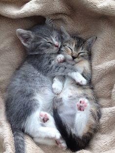 These cats are so cute! #animals #cute