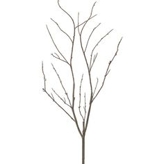Crate & Barrel Frosty Branch (41.355 IDR) ❤ liked on Polyvore featuring home, home decor, floral decor, crate and barrel and branches home decor
